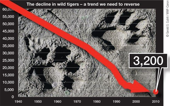 Tiger conservation on the rise!
